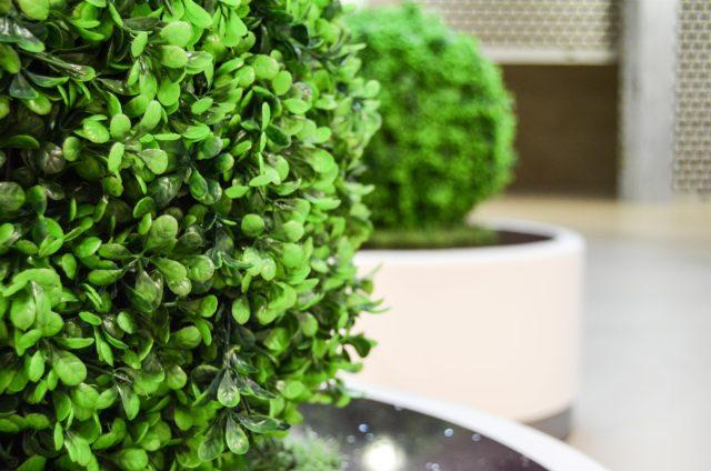 Plantes artficielles