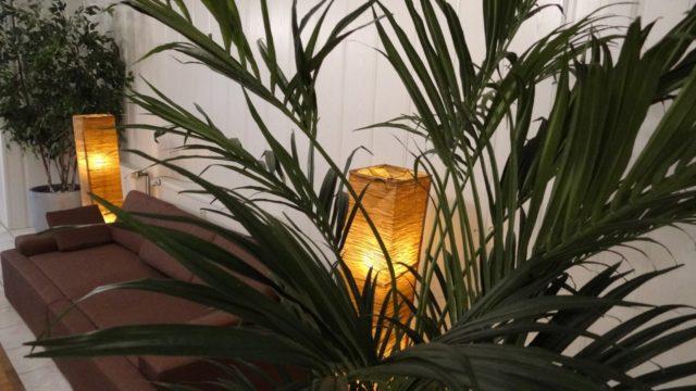 Plante d'intérieur kentia