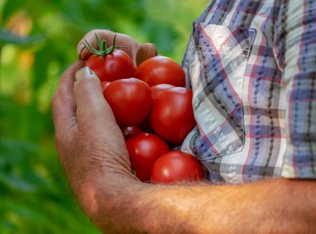 Tomates et fruits rouge, riche en antioxydant