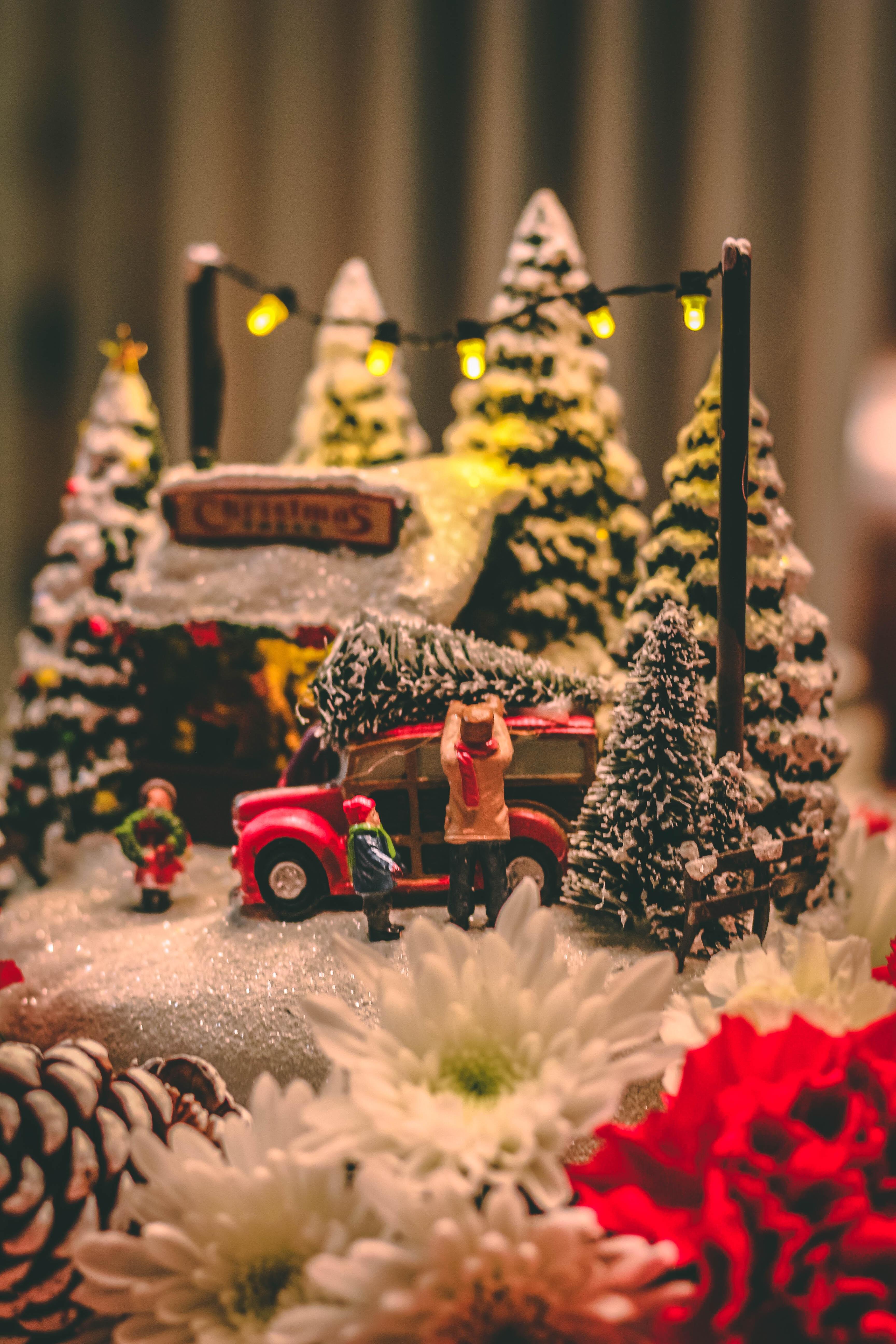 Choix d'un arbre de Noël